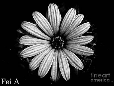 Photograph - Petal B W by Fei A