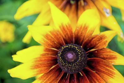 Photograph - Petal Palette by Ed Waldrop