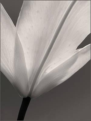 Photograph - Petal Power by Joseph Hedaya