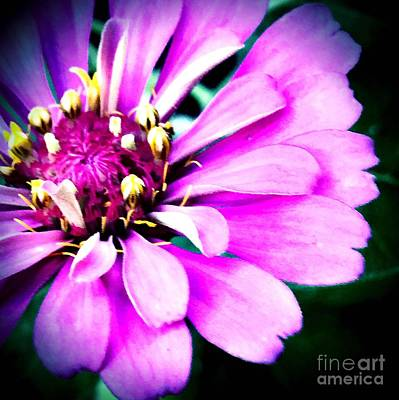 Photograph - Petal Power by Vonda Lawson-Rosa