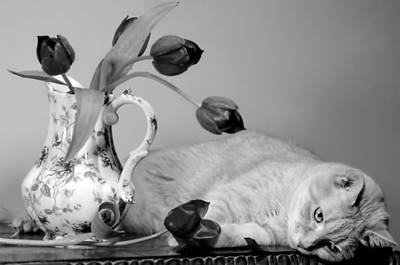 Photograph - Petal Pusher  by Diana Angstadt