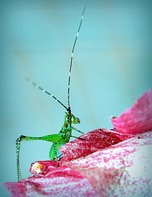 Photograph - Petal Pusher by Faith Williams