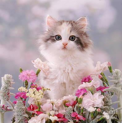 Photograph - Petal Puss by Warren Photographic