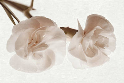 Photograph - Petal Soft by Leda Robertson