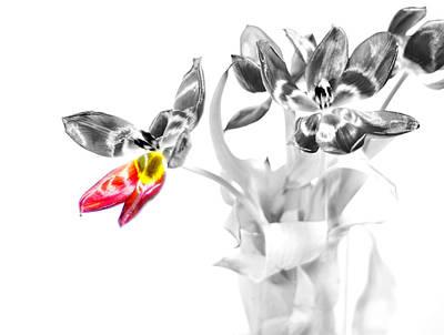 Petal Wings Fly Art Print