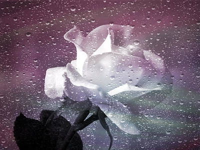Photograph - Petals And Drops by Julie Palencia