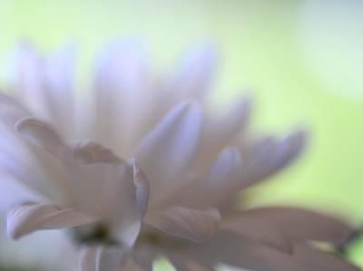Photograph - Petals by Corinne Rhode