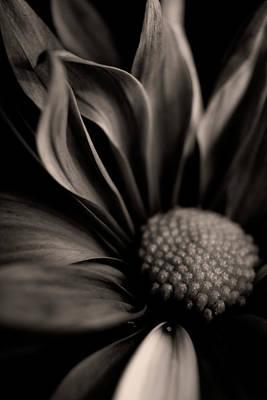 Photograph - Petals by Erica Kinsella