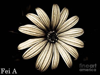 Photograph - Petals  by Fei Alexander