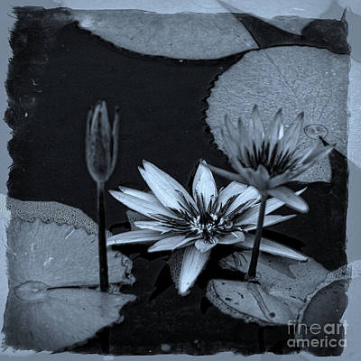 Petals Floating On Water Bw Art Print