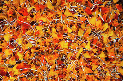 Photograph - Petals Galore  by Tim Gainey