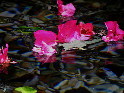 Photograph - Petals In Water by Scott Hovind