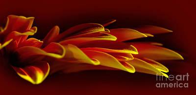 Photograph - Petals Like Fingertips By Kaye Menner by Kaye Menner