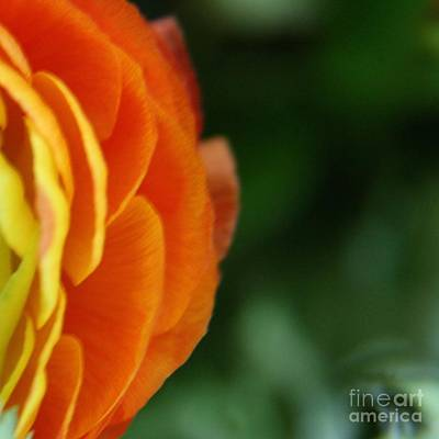 Photograph - Petals by Lynn England