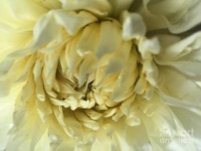 Photograph - Petals by Nona Kumah