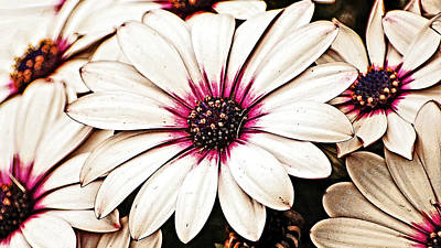 Photograph - Petals Oblong by Marty Koch