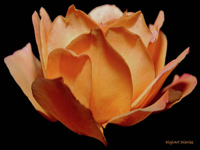 Petals Of Orange Sorbet Art Print by DigiArt Diaries by Vicky B Fuller