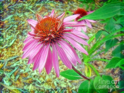 Photograph - Petals On A Purple Coneflower by Sue Melvin