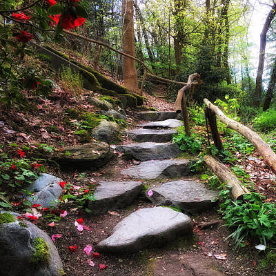 Photograph - Petals On The Path by Connie Handscomb