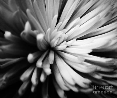 Photograph - Petals by Robin Lewis