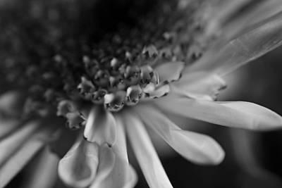 Photograph - Petals by Sarah Boyd