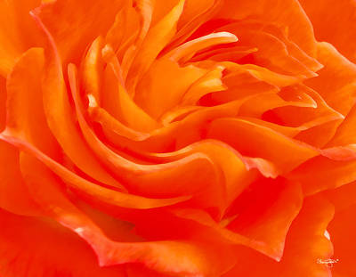 Photograph - Petals by Shanna Hyatt