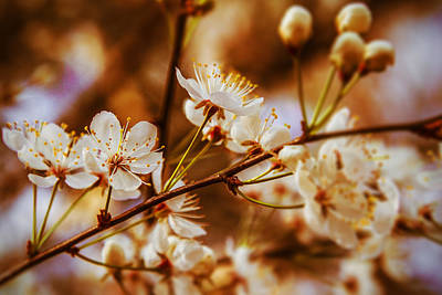 Photograph - Petals Wide Open - Spring Flowers by Barry Jones