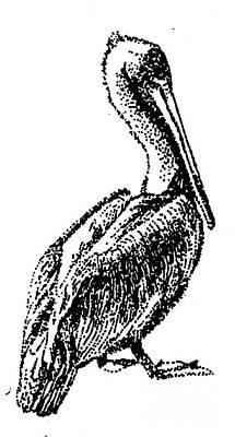 Digital Art - Pete The Pelican by Shelley Myers
