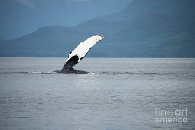Photograph - Petersburg Ak Whale Fin by Louise Magno