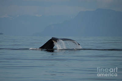 Photograph - Petersburg Ak Whale Tail Waterfall by Louise Magno