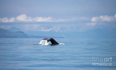 Photograph - Petersburg Ak Whale Tale 6 by Louise Magno
