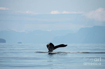 Photograph - Petersburg Ak Whale Wave by Louise Magno