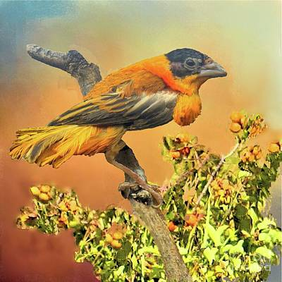 Photograph - Petit Oiseau Dans Plaqueminier Or Small Bird In Persimmons  by Janette Boyd