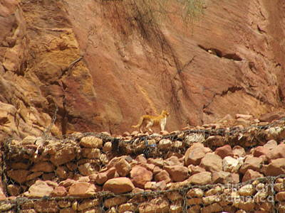 Photograph - Petra Cat Hunter by Donna L Munro