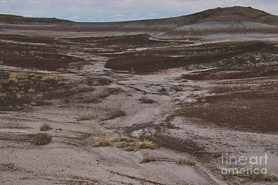 Photograph - Petrified Forest A9210l by Stephen Parker