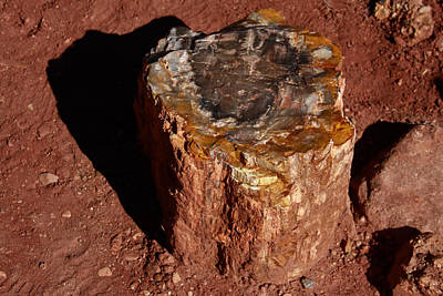 Photograph - Petrified Forest by Aidan Moran