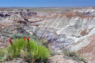 Photograph - Petrified Forest by Debbie Green