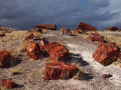 Print featuring the photograph Petrified Forest National Park by James Peterson