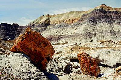 Photograph - Petrified Logs by Frank Townsley