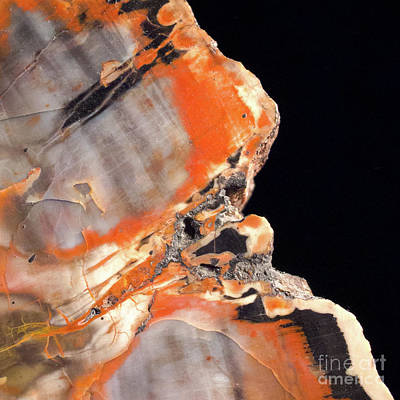 Photograph - Petrified Wood  -80570 by John Bald
