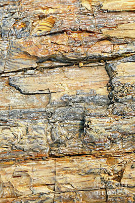 Photograph - Petrified Wood Nature Abstract by Carol Groenen