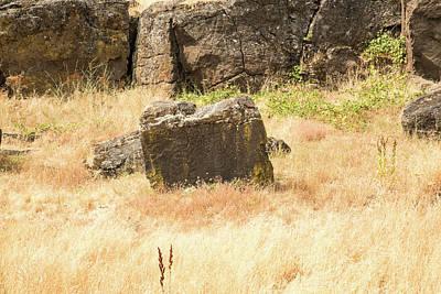 Photograph - Petroglyph  1 by Tom Cochran