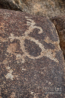 Photograph - Petroglyph #2 by Anne Rodkin