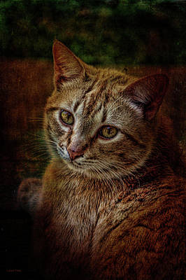 Photograph - Pets Fat Cat Portrait 2 by Lesa Fine