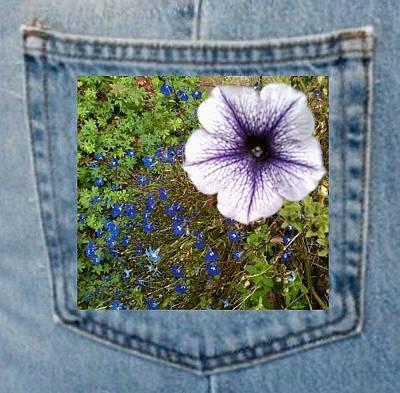 Photograph - Petunia And Blue Flowers Pocket by Julia Woodman