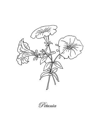 Drawing - Petunia. Botanical by Masha Batkova