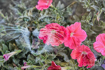 Photograph - Petunia Cat by Olga Hamilton
