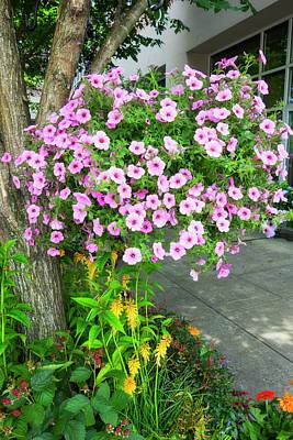 Photograph - Petunia Flower Series Y6186 by Carlos Diaz