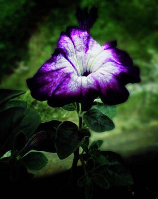 Photograph - Petunia by Mike Breau