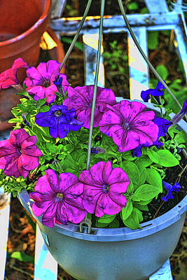 Photograph - Petunia - Photopainting by Allen Beatty